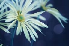 flower707