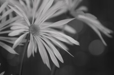 flower707-3