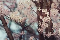 flower708-2