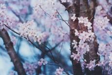flower708