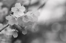 flower709-3