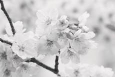 flower710-3