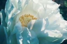 flower711-2
