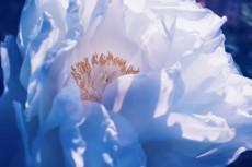flower711