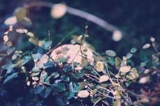 flower712-2
