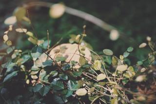 【高解像度】森の中の小さな葉(3パターン)
