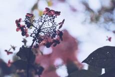 flower713-2