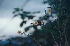 flower714-2