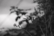 flower714-3