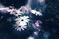 flower715-2