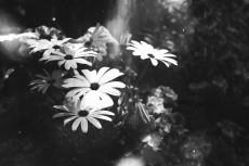 flower715-3