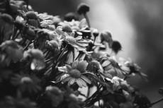 flower716-3