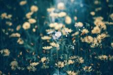 flower717-2