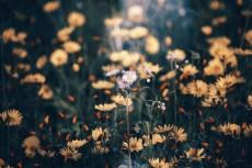 flower717
