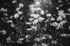 flower717-3