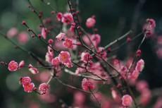 flower722-2