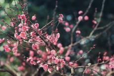 flower723-2