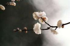 flower725-2