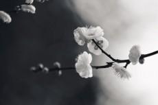 flower725-3