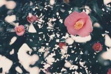 flower726-2