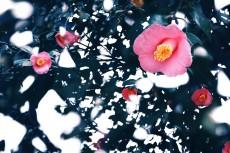 flower726