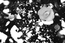 flower726-3