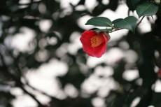 flower727-2