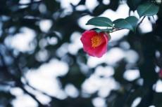 flower727