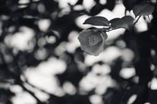 flower727-3