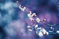 flower729