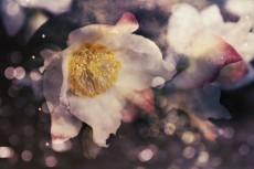 flower730-2