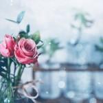 【高解像度】薔薇(バラ)の花瓶がある風景(3パターン)