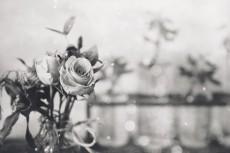 flower731-3