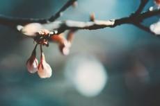 flower733-2