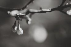 flower733-3