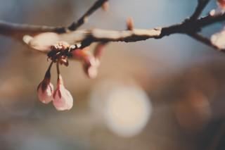 【高解像度】春を待つ蕾(3パターン)