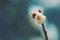 flower734-2