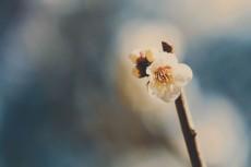 flower734