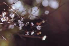 flower736-2