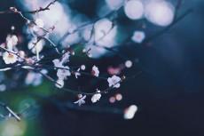flower736