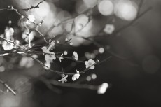 flower736-3
