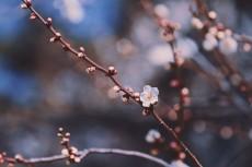 flower737-2