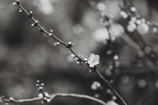flower737-3