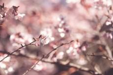 flower740-2