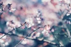 flower740