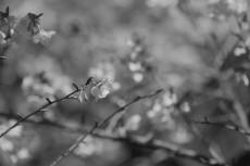 flower740-3