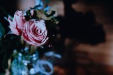 flower744-2