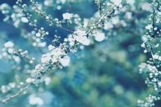 flower745-2