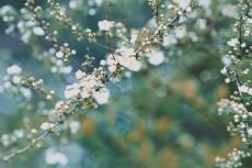 flower745