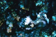 flower746-2